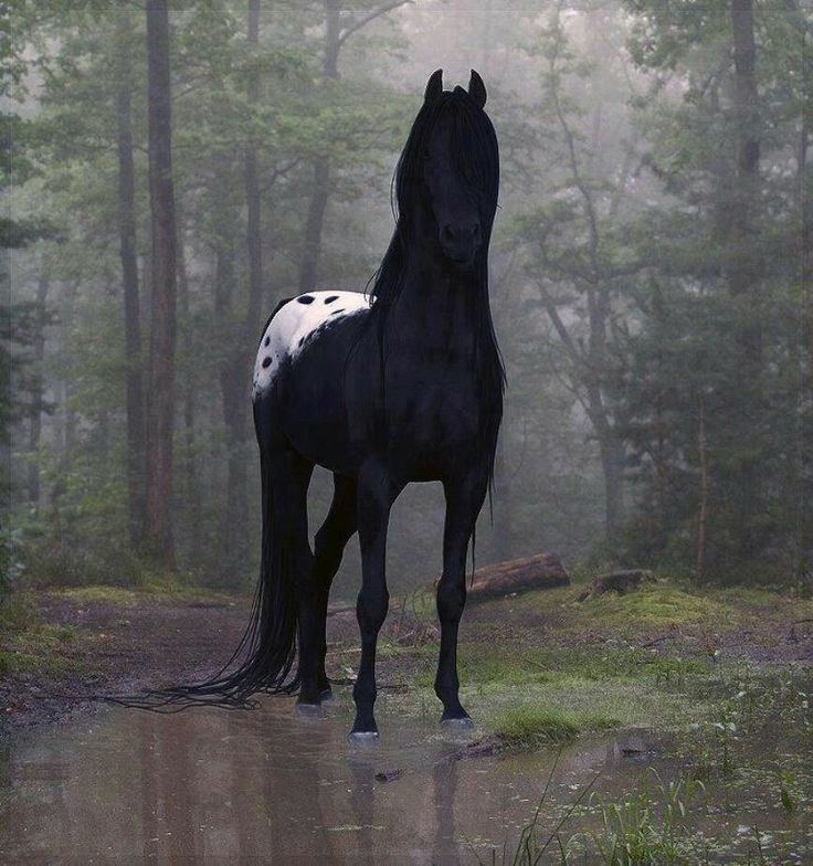 Most Stunning Horse I Have Ever Seen