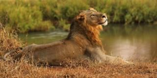 South African lions eat 'poacher', leaving just his head 12 February 2018