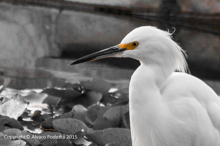 Un ave hermosa, con un bello peinado