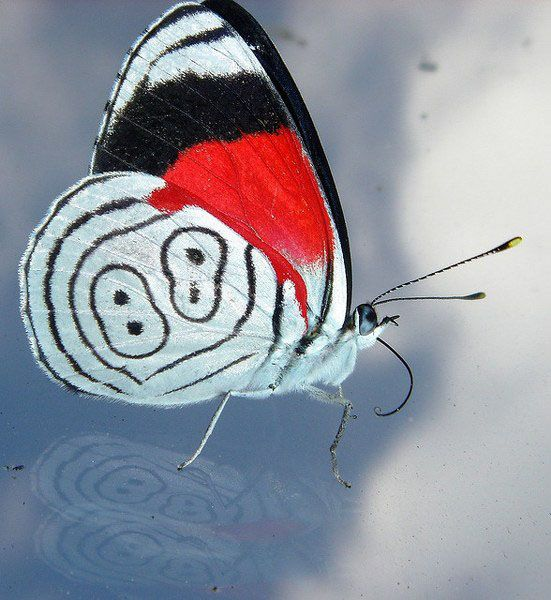 88 Butterfly from South America