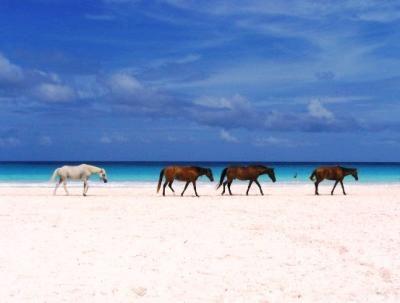 Harbor Island ~ Bahamas