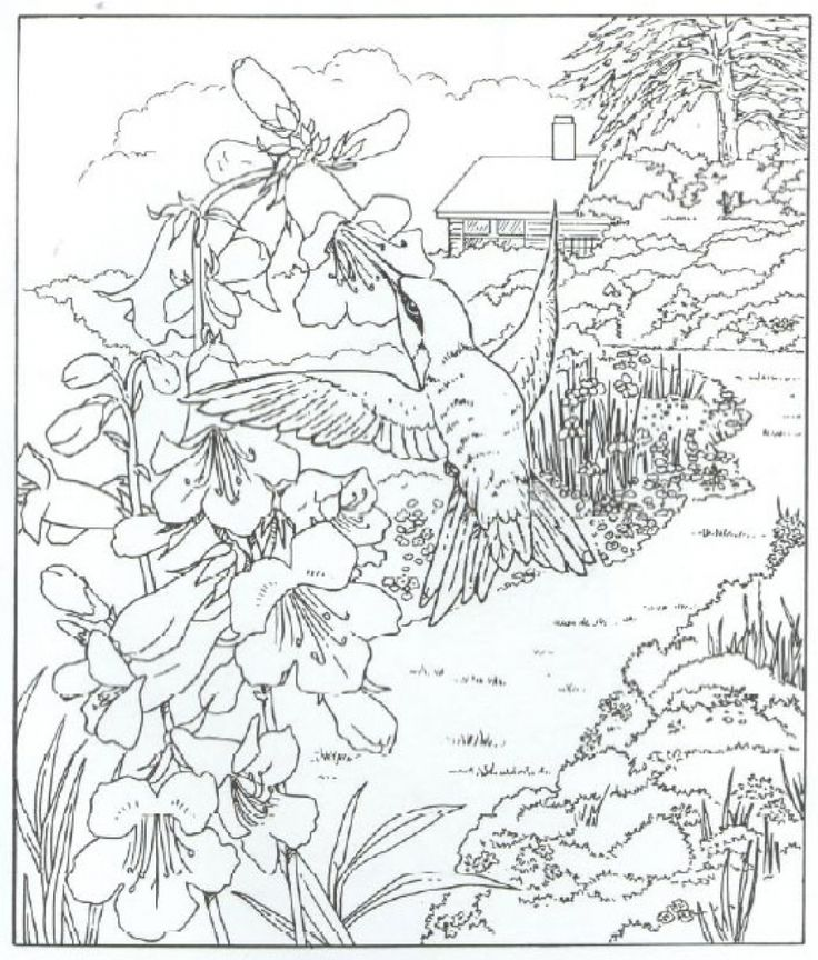 Very Detailed Realistic Hummingbird Coloring Page For ...