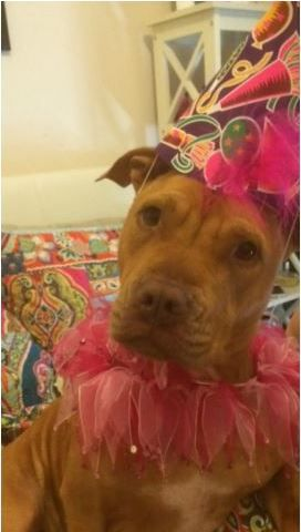 Here are some lovely pictures of Indy celebrating her 1st birthday with her little sis Mia and the family :)  Check out the awesome party collars they are wearing by visiting: http://www.shop4pets.com.au/FASHION-ACCESSORIES/Party-Collars/pl.php