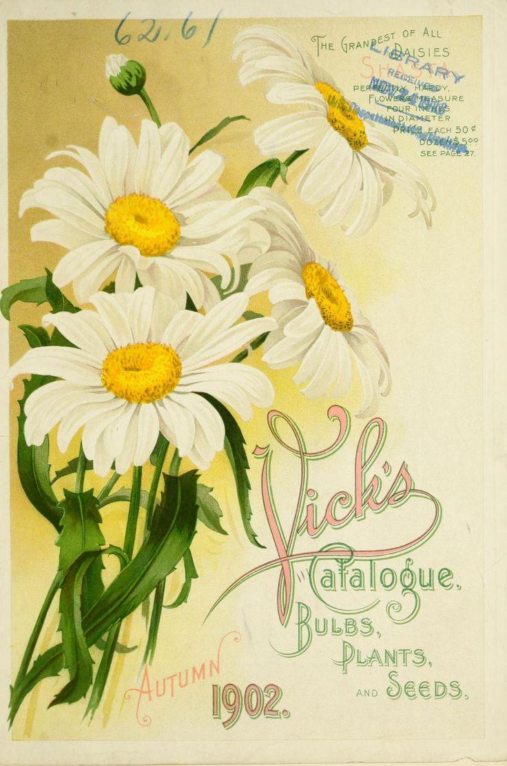 Vick's 1902 catalogue