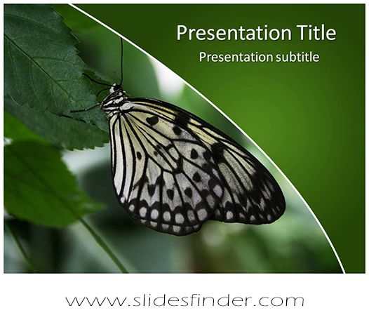 23 best free abstract art powerpoint templates images on pinterest create effective butterfly ppt presentation with our free butterfly powerpoint toneelgroepblik Choice Image