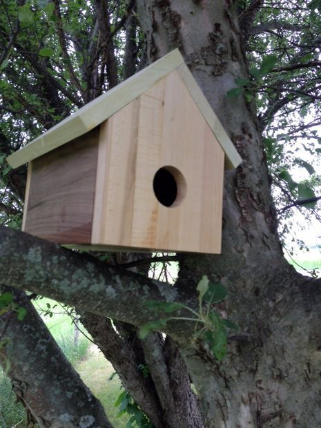1000 Images About Swallow Bird House Plans On Pinterest