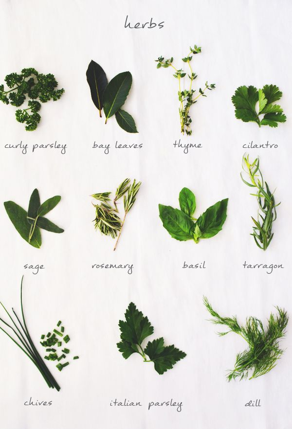 HOW TO USE FRESH HERBS  Fluxi on tour  Recipes  Cooking