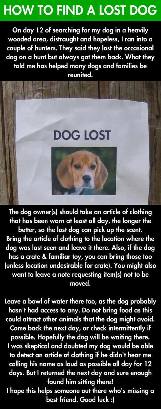 If you lost your dog this may help you. Who knows? It couldn't hurt to try if I ever need it.