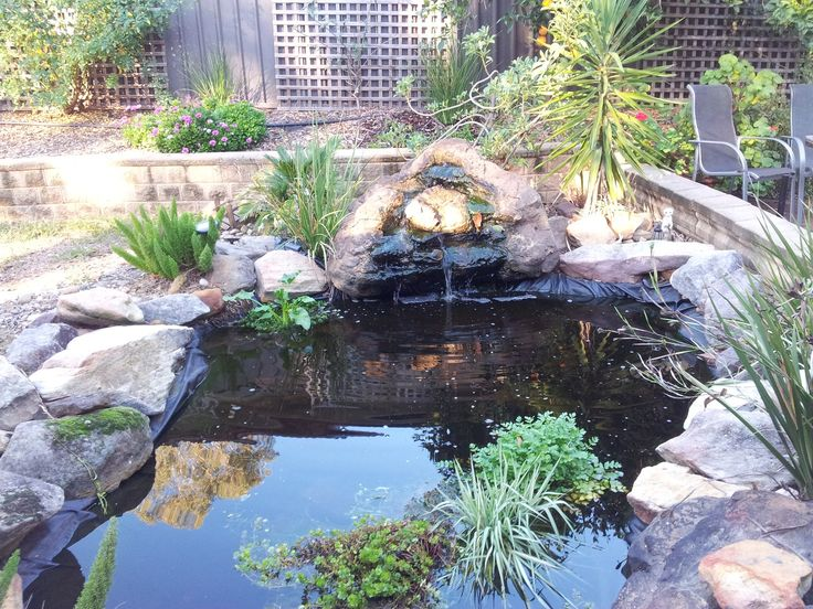 My fishpond is looking great! With fish!