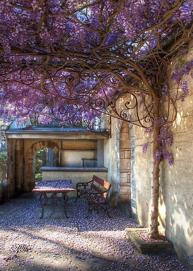 wisteria among wrought iron garden furniture.