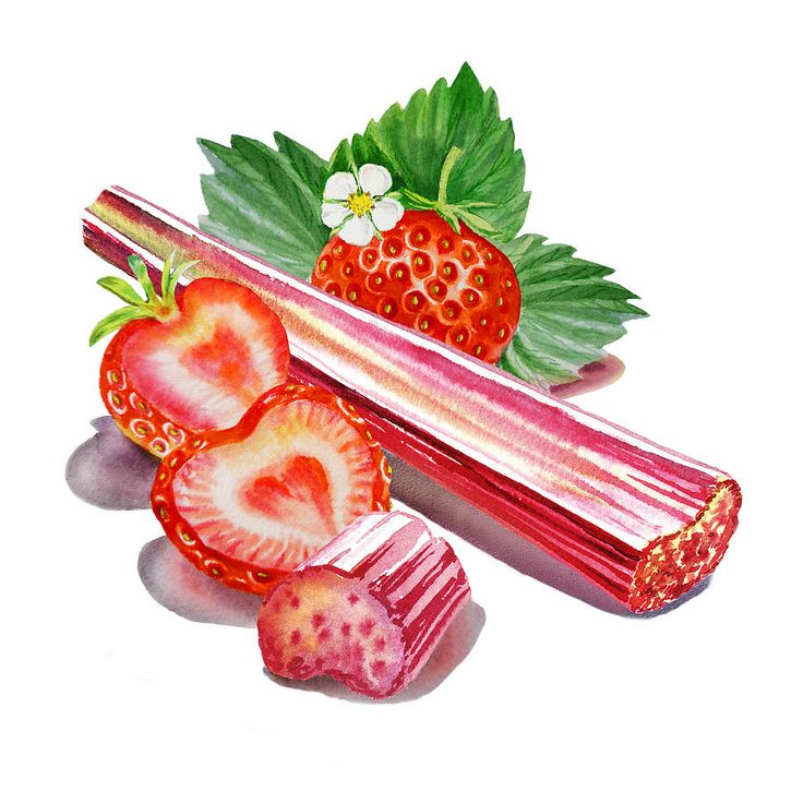 Rhubarb Google Search 603 Elm Pinterest Search And