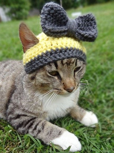 Cats in hats - Telegraph  Every cat needs a bow...