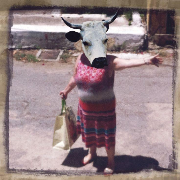 Aunt cow