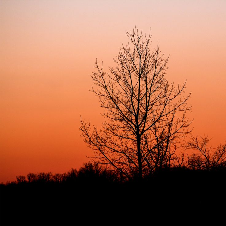 Setting Sun. #silhouette #photography #nature