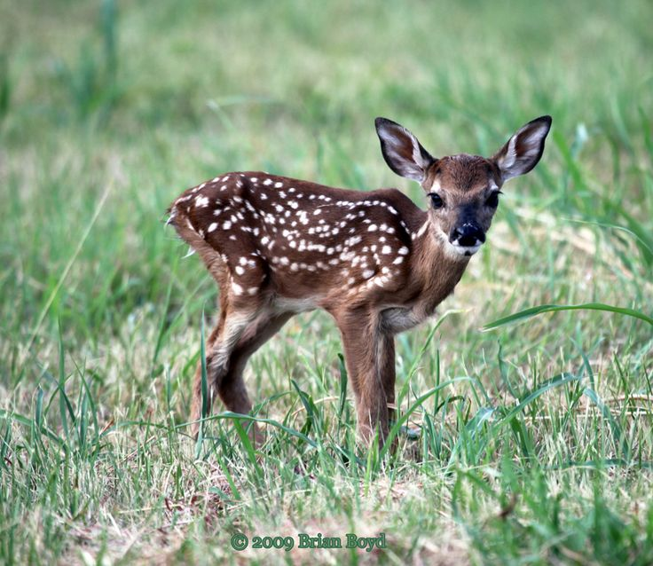 baby fawn pictures | Leave a Reply Cancel reply