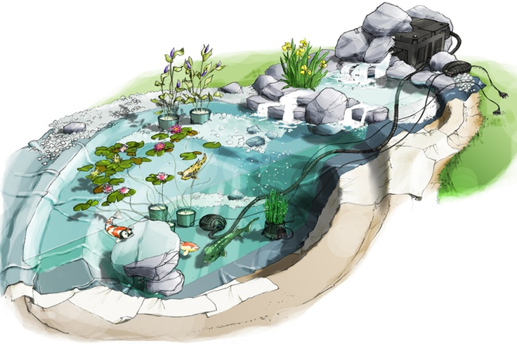Le jardin aquatique botanic ext rieur mare rivi re for Plante bassin poisson