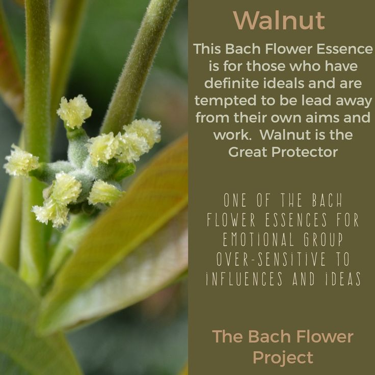 Bach Flower Remedy WALNUT