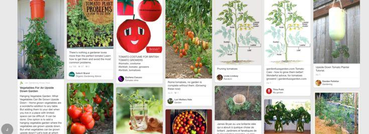 Glastuinbouw in beeld met Pinterest