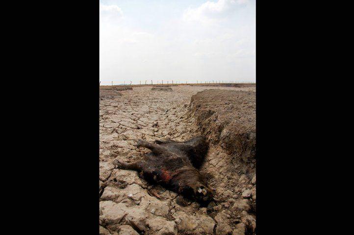 La tragedia que sí fue: nuevas imágenes de sequía en Casanare | Nación | Noticiascaracol.com