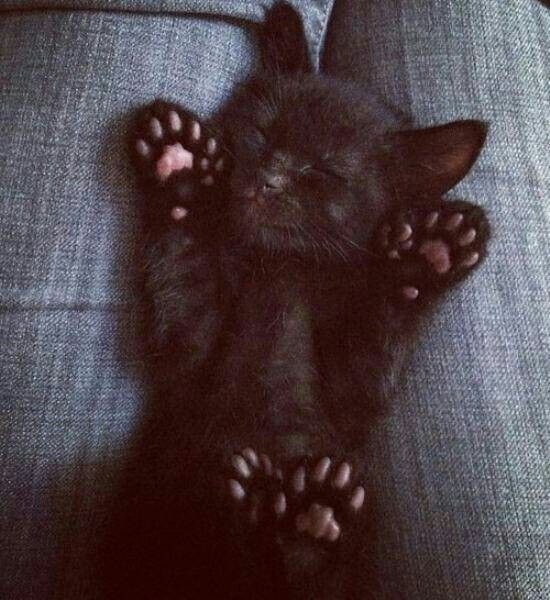 Adorable! Tiny little house panther...