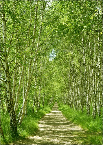 "Birch forest - This makes me think of the poem by Robert Frost called ""Birches"". :)"