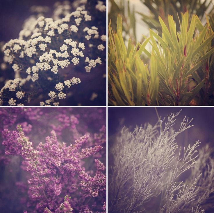 """Fynbos Textures"" © Natascha van Niekerk Fine art photography as decor."