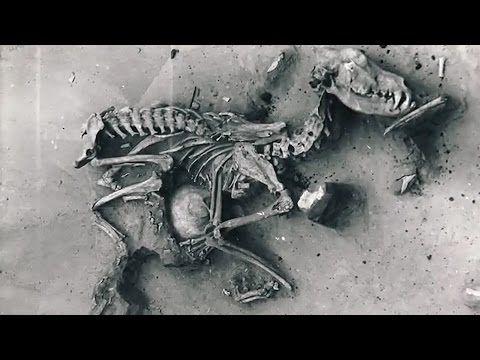 Honden: al 14.000 jaar onze beste vriend - National Geographic Nederland/België
