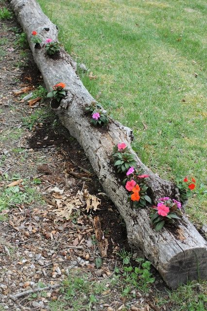 Re-Purposed Tree Log Planter