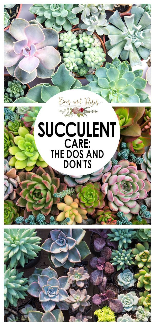 Succulent Care The Dos And Don Ts In 2020 Garden Care