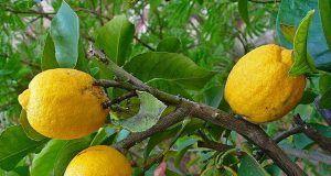 Beba agua de limón en lugar de pastillas si tiene uno de estos 13 problemas.