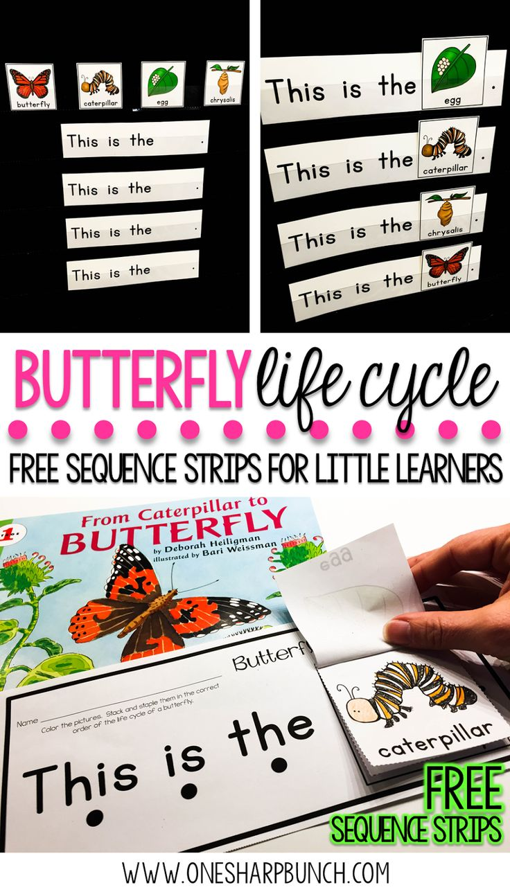 best 25 life cycle of butterfly ideas on pinterest butterfly