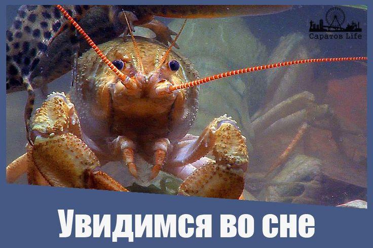 Яндекс проанализировал поисковые и выяснил, что чаще всего саратовцам снятся раки  Подробнее http://nversia.ru/news/view/id/101608 #Саратов #СаратовLife