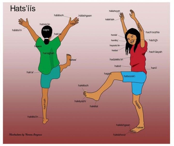 Parts of the Body in Navajo Language