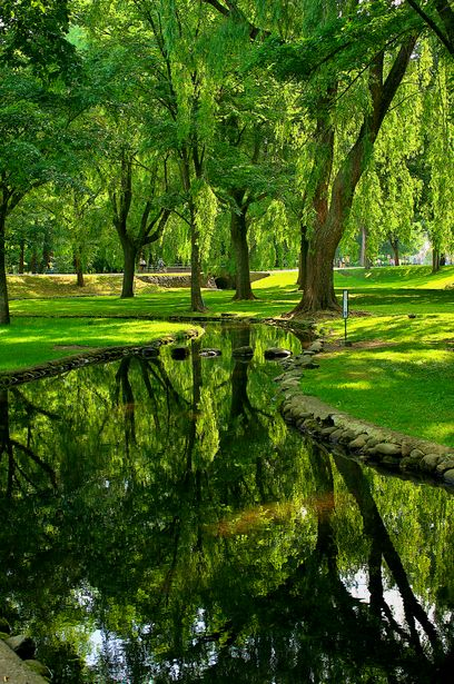 green and shady reflections