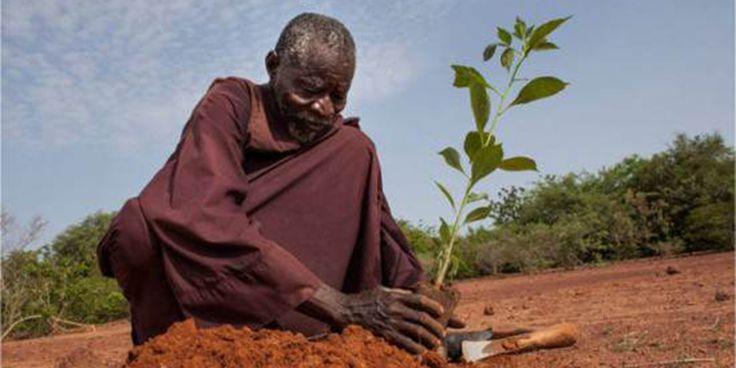 Em 1974,Yacouba Sawadogo viu a seca assolaro Sahel, a zona ecoclimática e biogeográfica de transição entre o norte do deserto do Saara e o sul da savana