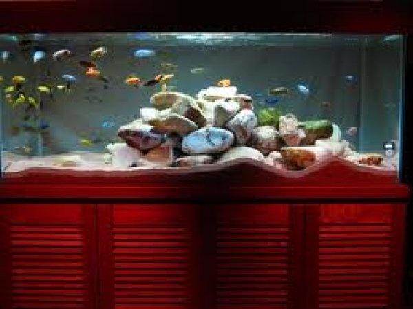 Home Aquarium Sales,Setup,Decoration & Maintenance in Bangalore