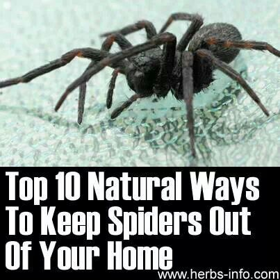 Top. 10 natural ways to keep spiders out of your home