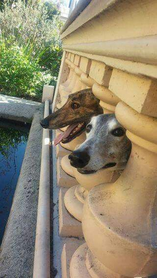 """Libby and Carter wanted to say """"Hi"""" from Balboa Park in San Diego. Yes, heads go there."""