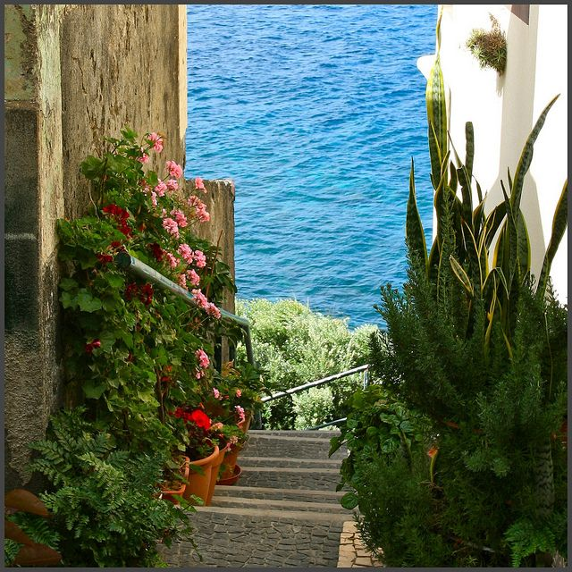 Flowers down the stairs to the Atlantic Madeira Islands #Portugal #PortugalFlowerPower
