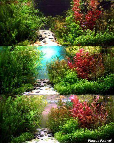 1000 idees sur le theme Aquascaping sur Pinterest Aquarium ...