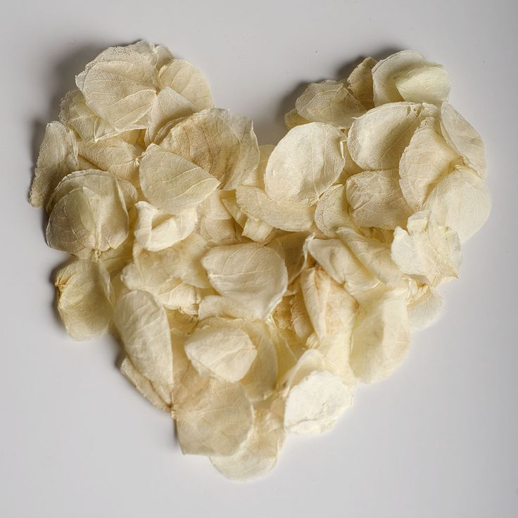 Ivory Wedding Confetti Real Petals Biodegradable www.adamapple.co.uk