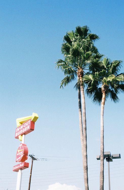 Palm trees & In-N-Out = paradise.