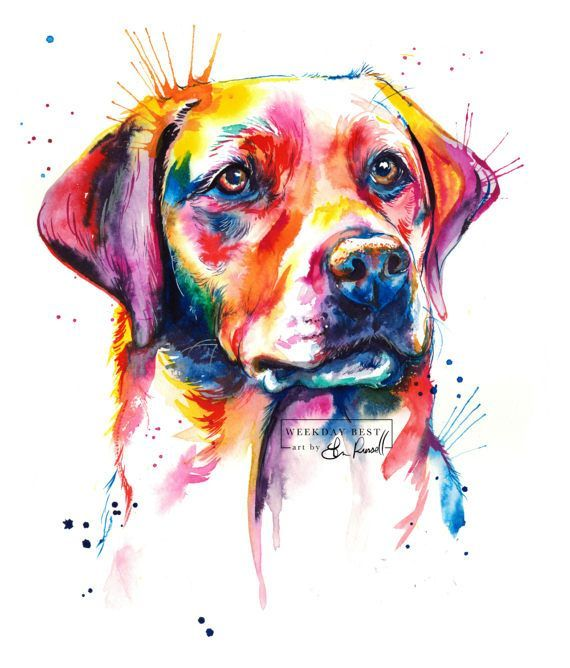 Colorful English Lab Labrador Retriever Art Print Print Of My