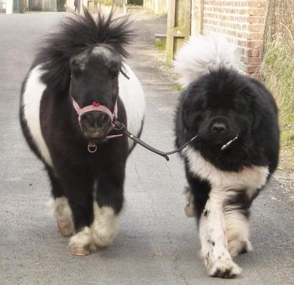 GOING FOR A WALK WITH MY FRIEND