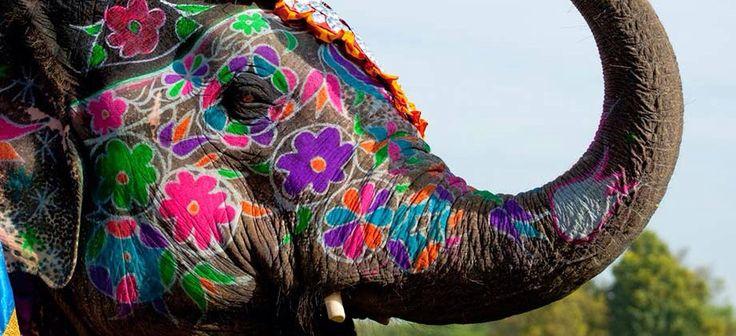 Arc-en-Ciel de couleurs à Travers l'Inde et son extraordinaire nature.