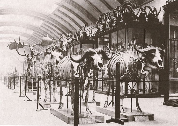 History Of The London Museum Of Natural History