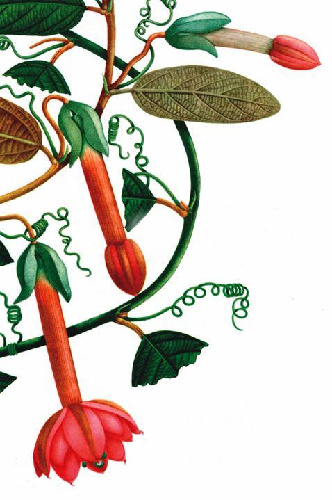 Conocido en la Historia de Colombia como la Expedición Botánica, sus objetivos científicos dieron como resultado la recolección y clasificación de 20 mil especies vegetales y 7 mil animales de la actual república de Colombia,