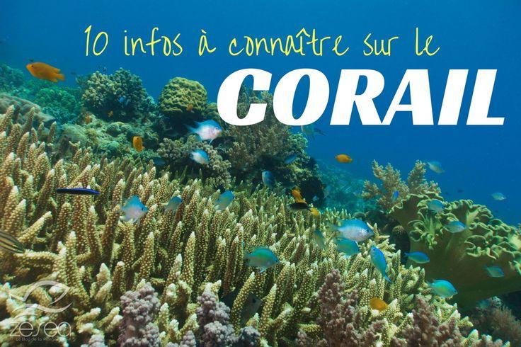 Le corail fascine. Il fait à coup sûr penser au soleil, à la chaleur, aux belles plages et à une vie sous-marine foisonnante ! Le connaissez-vous vraiment ?