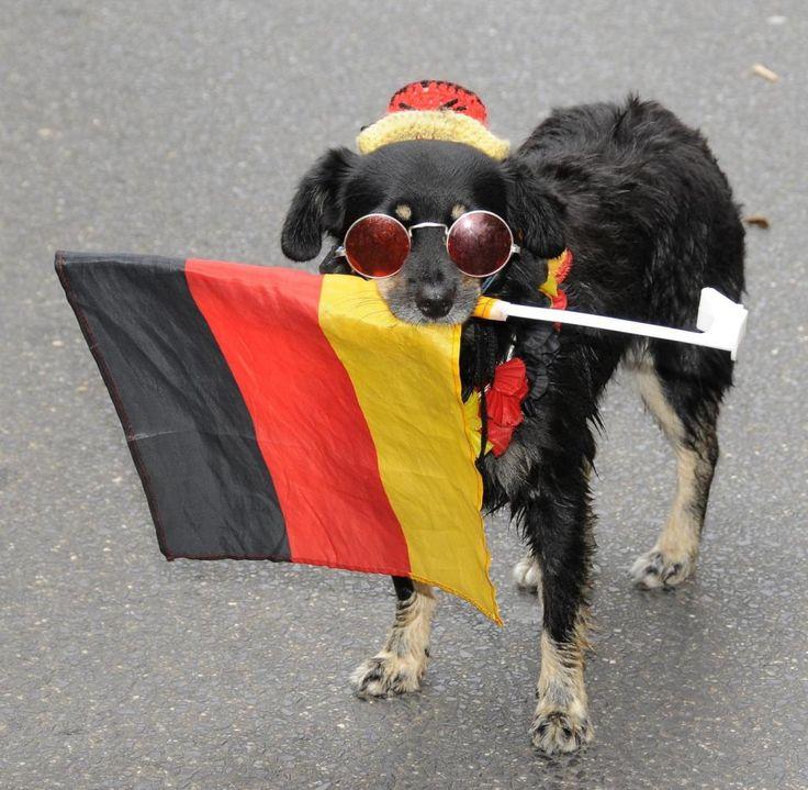 #deutsch sein 😁  Auf den Hund gekommen: Schwarz-Rot-Gold bei der Christopher Street Day Parade in Köln