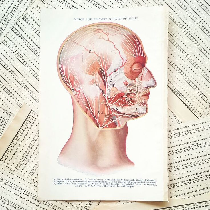 Vintage Medical Page - Motor and Sensory Nerves of Sight // Full colour book page form a previously neglected medical journal. In good condition with only the usual signs of age and use.